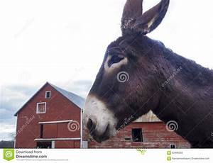 Donkey With Red Barn Stock Photo - Image: 62466350