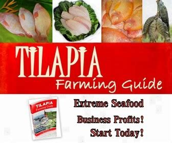 types  tilapia farms