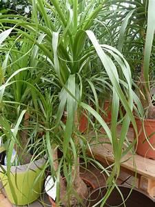 Arbuste D Intérieur : plantes d interieur decoration fashion designs ~ Premium-room.com Idées de Décoration