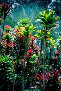 Hawaiian tropical gardens containing exotic plants ...