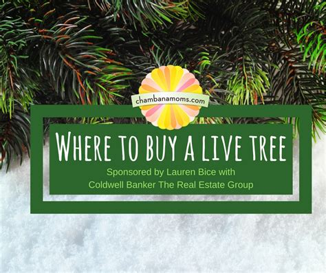 where to buy a live christmas tree in chaign urbana