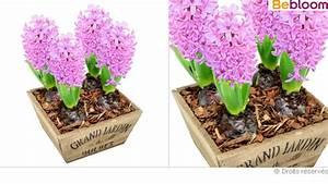 Bouquet De Fleurs Pas Cher Livraison Gratuite : fleurs pas cher livraison l 39 atelier des fleurs ~ Teatrodelosmanantiales.com Idées de Décoration