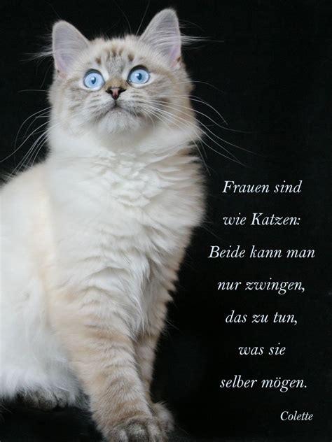 was katzen und frauen gemeinsam haben katzen poesie