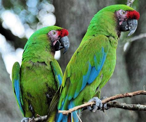 Amazon Birds List: 50+ Birds You'll Find in Ecuador's ...