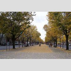 Unter Den Linden  Picture Of Unter Den Linden, Berlin
