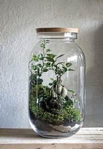 Bonsai Im Glas : die 103 besten bilder von pflanze im glas in 2019 planting flowers succulent terrarium und ~ Eleganceandgraceweddings.com Haus und Dekorationen