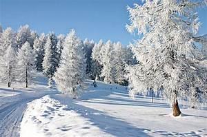 Gartenfest Im Winter : winter bayerischer wald winterurlaub in bayern skifahren ~ Articles-book.com Haus und Dekorationen