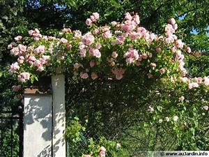 Rosier Grimpant Remontant : tailler un rosier grimpant ~ Melissatoandfro.com Idées de Décoration