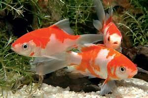 Goldfische Im Teich : aquaristikcenter neuss aquaristik meerwasser teich ~ Eleganceandgraceweddings.com Haus und Dekorationen