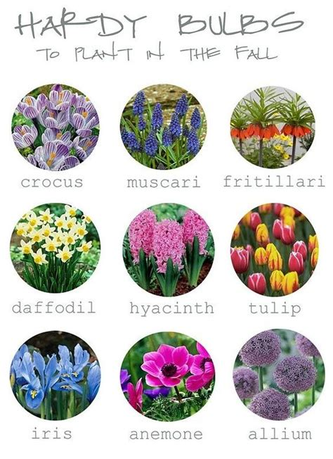 tips for planting fall bulbs different types posts and