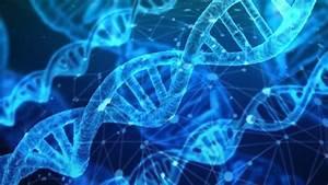 Computational Genetics Furthers Our Understanding Of Human