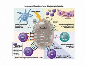Radiation Combined With Immune