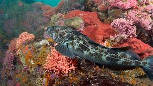 Let U0026 39 S Protect Critical Ocean Habitat