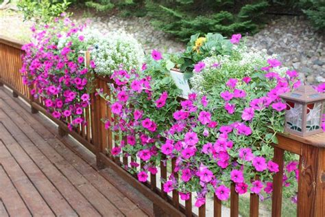 wave petunias in pots cool new petunias straight from the grower homestead gardens inc homestead gardens inc