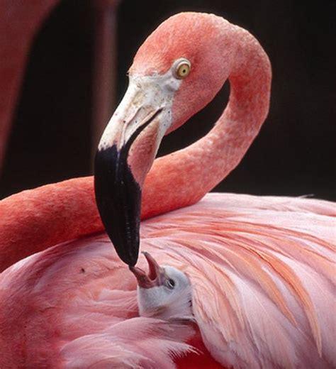 Amazing Exotic Birds - Barnorama