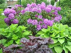 Welche Pflanzen Passen Gut Zu Hortensien : welche pflanzen passen zu rhododendron die neuesten ~ Lizthompson.info Haus und Dekorationen