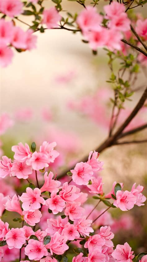 Spring Flowers Iphone Wallpaper Hd