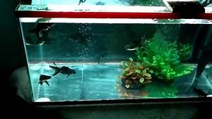 BLACK MOOR TANK: BIRTHDAY PRESENT (CEBU CITY) - YouTube