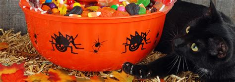 Halloween Candy Dish Dog Food by Cats Amp Candy Foods To Avoid For Halloween Hill S Pet