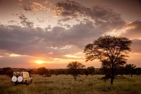 Best 44 Serengeti Wallpaper On Hipwallpaper Serengeti