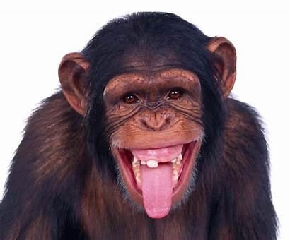 Funny Transparent Monkey Clipart Webstockreview Pngpix