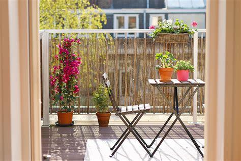 mes  plantes chouchoutes pour decorer  balcon mango