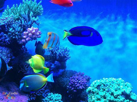 top  reasons  visit  monterey bay aquarium