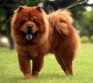 Big fluffy dog furry dogs pinterest big fluffy dogs for Big fluffy dog bed