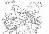 Nest Coloring Robin Birds Bird Pdf Popular sketch template