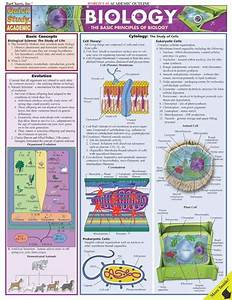 Basic Principles Of Biology Quick Review