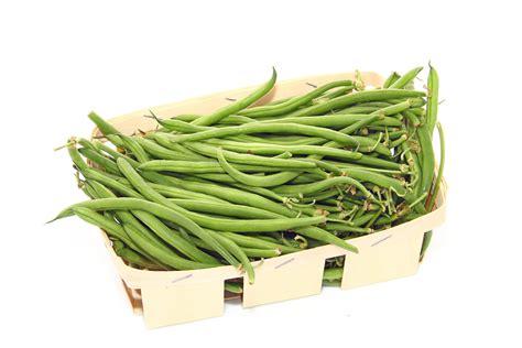 cuisiner les haricots verts frais cuisson haricots verts frais of cuisson haricots tarbais