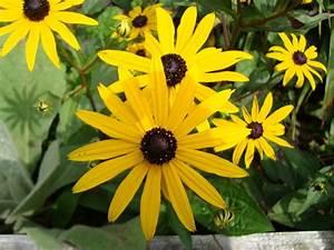 Blumen Für Schattige Plätze : gelbe blumen gelbe blumen natur view fotocommunity ~ Michelbontemps.com Haus und Dekorationen