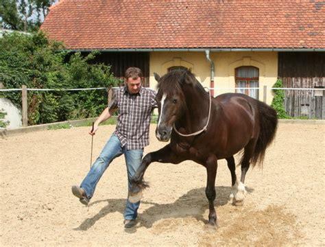 bodenarbeit zirkuslektionen horsehandling