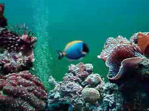 aquarium ikan laut youtube