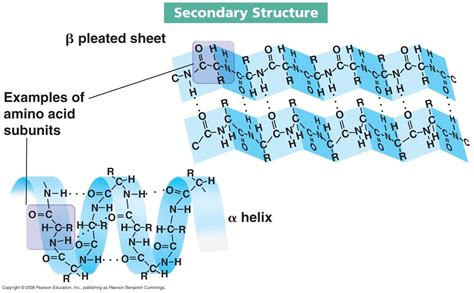 protein structure biochemistry 3304 with fox at university of houston main cus studyblue