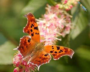TOP TEN MOST BEAUTIFUL BUTTERFLIES - ASVETH
