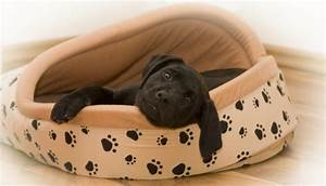 best dog beds for large breeds With best dog beds for large breeds
