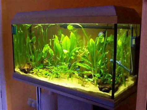 5 liter aquarium 95 litre 25 gallon planted community tropical freshwater
