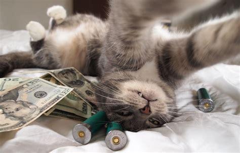 rich cats rolling  cash