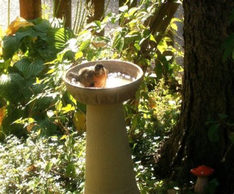 Homemade Birdbath Ideas   ThriftyFun