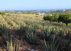 Ableger Aloe Vera : zu gast bei santaverde in andalusien beautyjagd ~ Lizthompson.info Haus und Dekorationen