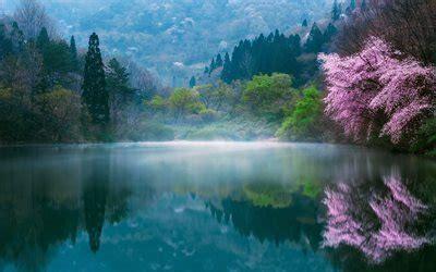 wallpapers japan spring sakura lake morning