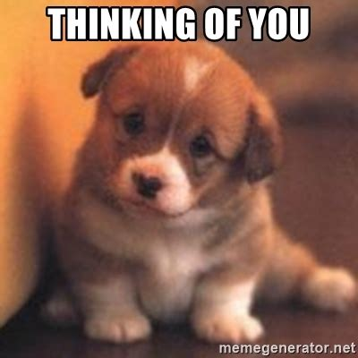 Thinking Of You Memes - thinking of you cute puppy meme generator