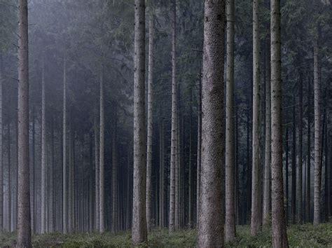 Wald/fluss At Photo-eye Gallery