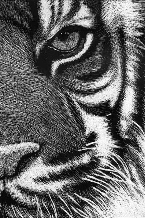 scratchboard tigre  roman novikov  deviantart