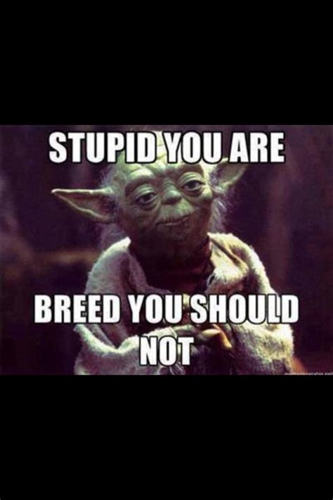 Funny Yoda Memes - funny funny funny yoda knows quotes pinterest funny funny funny humor and stuffing