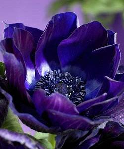 46 Best Garden Images On Pinterest Landscaping Ideas