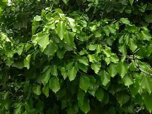 Efeu Pflanzen Kaufen : online pflanzenkatalog g nstig b ume pflanzen kaufen bei lorberg ~ Buech-reservation.com Haus und Dekorationen