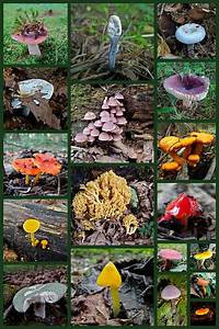 Pennsylvania Mushrooms Collage 2 Photograph by Mother Nature