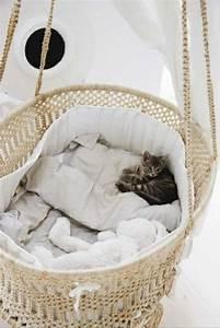 Korb Bett Baby : verw hnen sie ihre hauskatze mit einem kuschelweichen katzen bett kuschelweich verw hnen und bett ~ Sanjose-hotels-ca.com Haus und Dekorationen